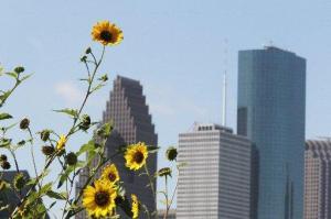 Photo Courtesy of Houston Chronicle